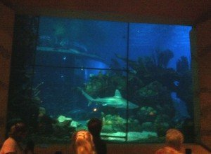 A shark swims by during dinner at the Coral Reef Restaurant. 