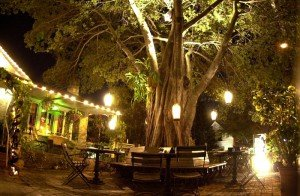 Dada's front yard features seating around a giant banyan tree